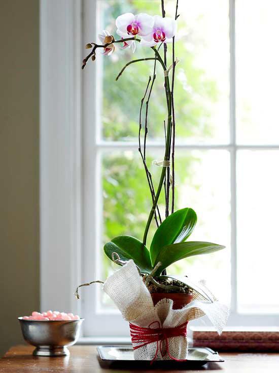 цветок орхидеи для 14 февраля