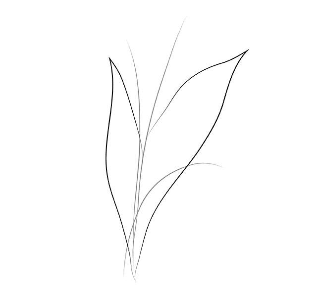 ландыш рисунок карандашом поэтапно различные виды рольштор