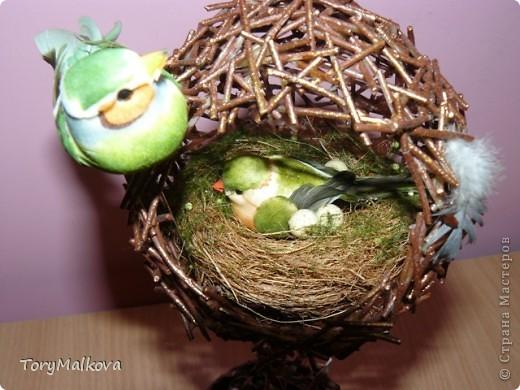 Топиарии гнезда своими руками