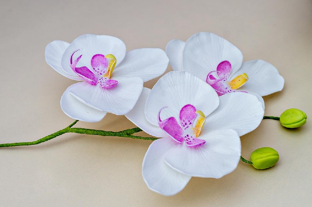 Как сделать орхидею из фоамирана с шаблонами