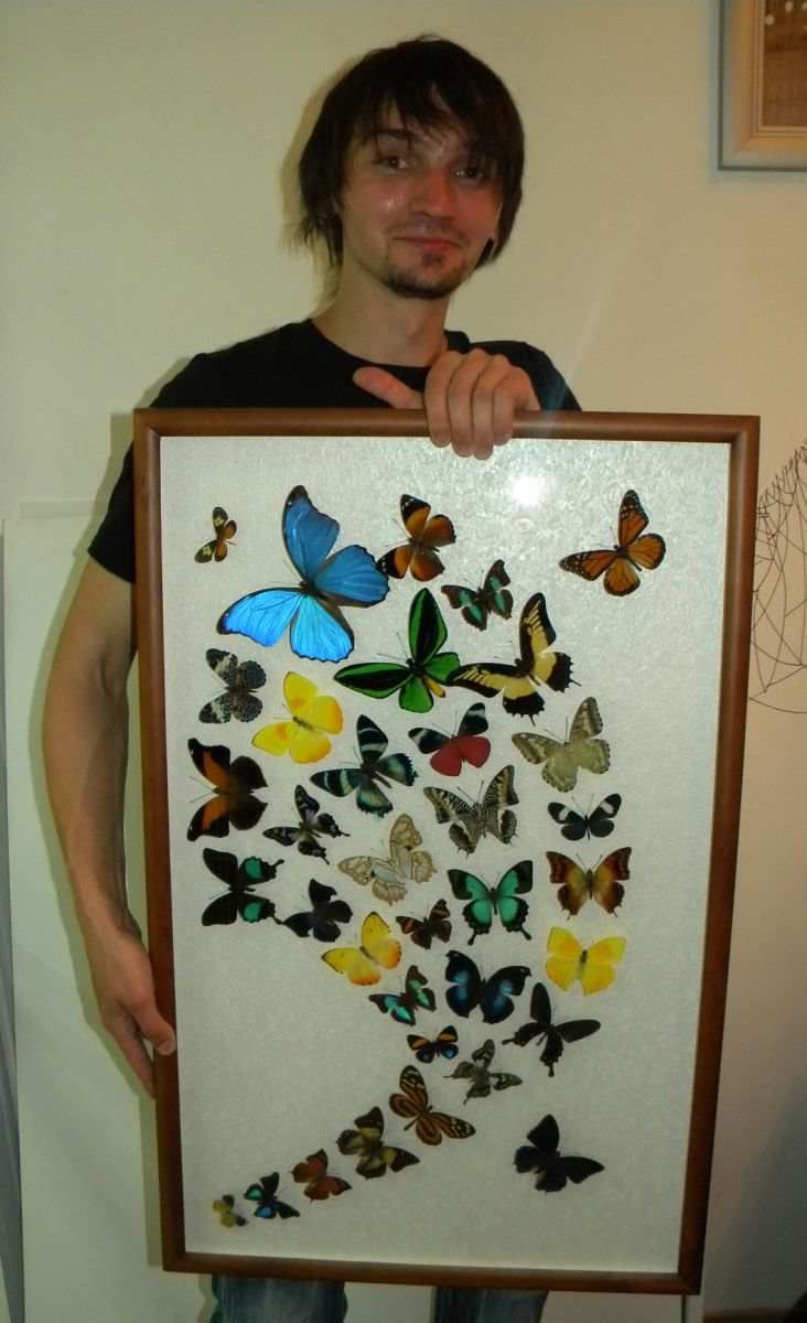 Коллаж из бабочек своими руками 21