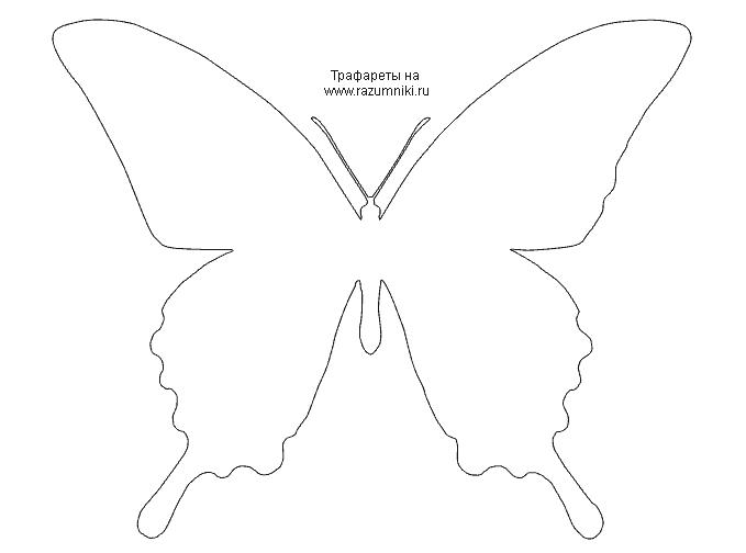 Трафарет бабочки для стен своими руками