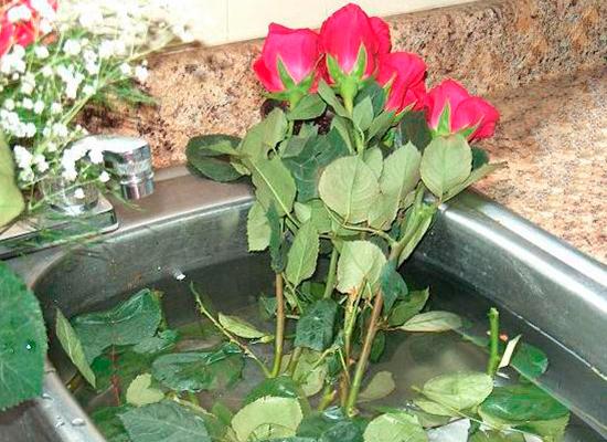 Как сделать так чтобы роза не цвела
